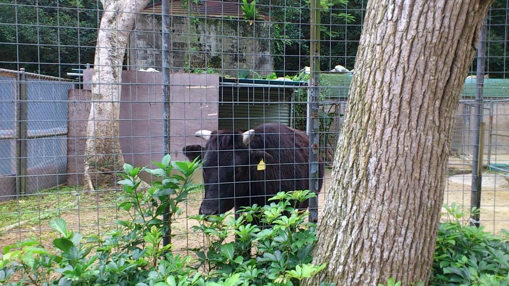 okinawa zoo
